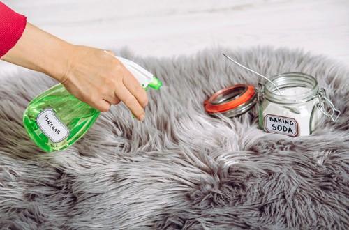 Applying vinegar on carpet cleaning