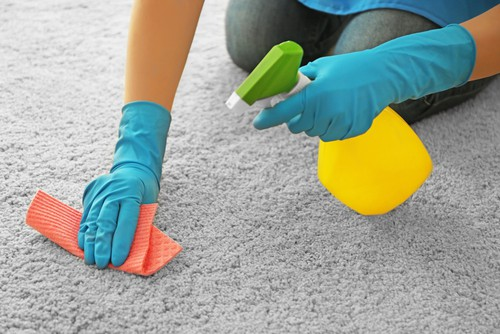 How Fast Does Mold Grow In Wet Carpet?